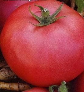 Томаты подарок женщине: описание сорта, его характеристика, выращивание на приусадебном участке
