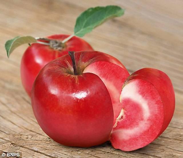 Сорт яблок розовый жемчуг: фото, описание, отзывы