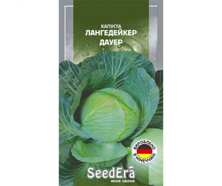 Немецкая капуста лангедейкер: достоинства, минусы, советы по выращиванию, реальные отзывы
