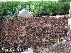 Мульчирование почвы - что это такое и как проводить правильно