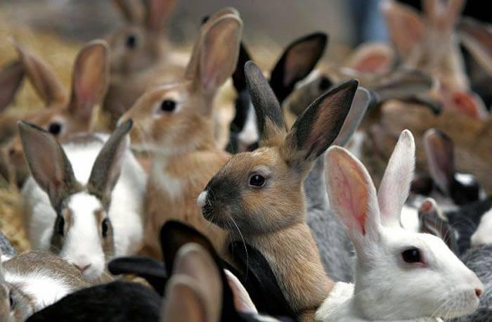 Кролики как бизнес: выгодно или нет, с чего начать, как преуспеть