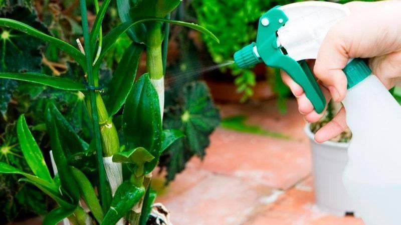 можно ли поливать орхидею кипяченой водой