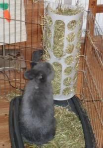 Крольчатник своими руками — пошаговая инструкция, схемы и чертежи