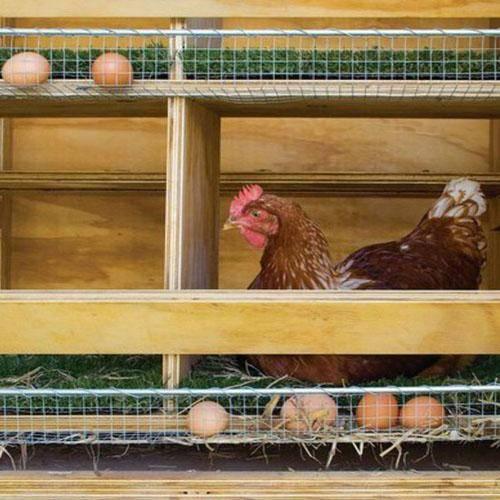 Гнезда для кур: размеры, требования и изготовление своими руками