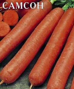 """Морковь """"самсон"""": характеристика и описание сорта, отзывы, фото"""