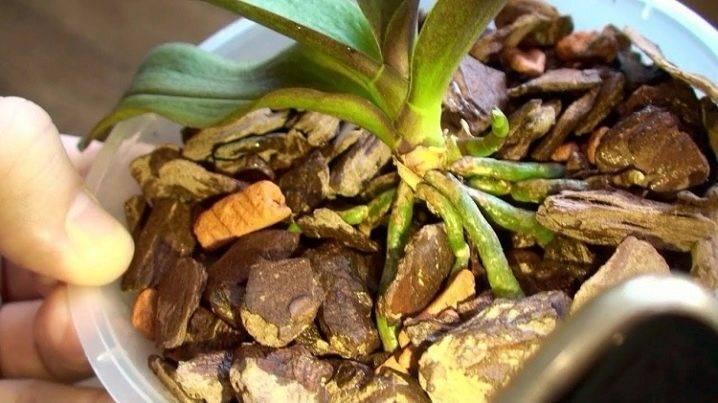 Серамис: натуральный искусственный субстрат для комнатных растений