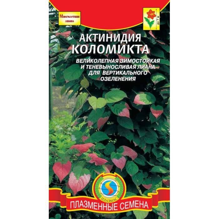 Как вырастить киви (актинидию) из семян