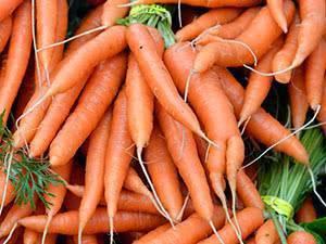 Особенности посадки моркови в открытый грунт