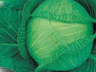 Сорта капусты кольраби: описание, фото, отзывы, ранние, поздние, лучшие для открытого грунта