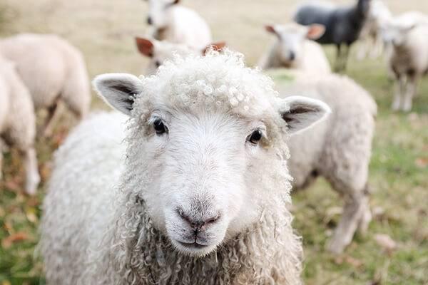 Выбираем машинку для стрижки животных: плюсы и минусы, виды, особенности