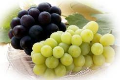 Вина из муската — описание вкуса и аромата