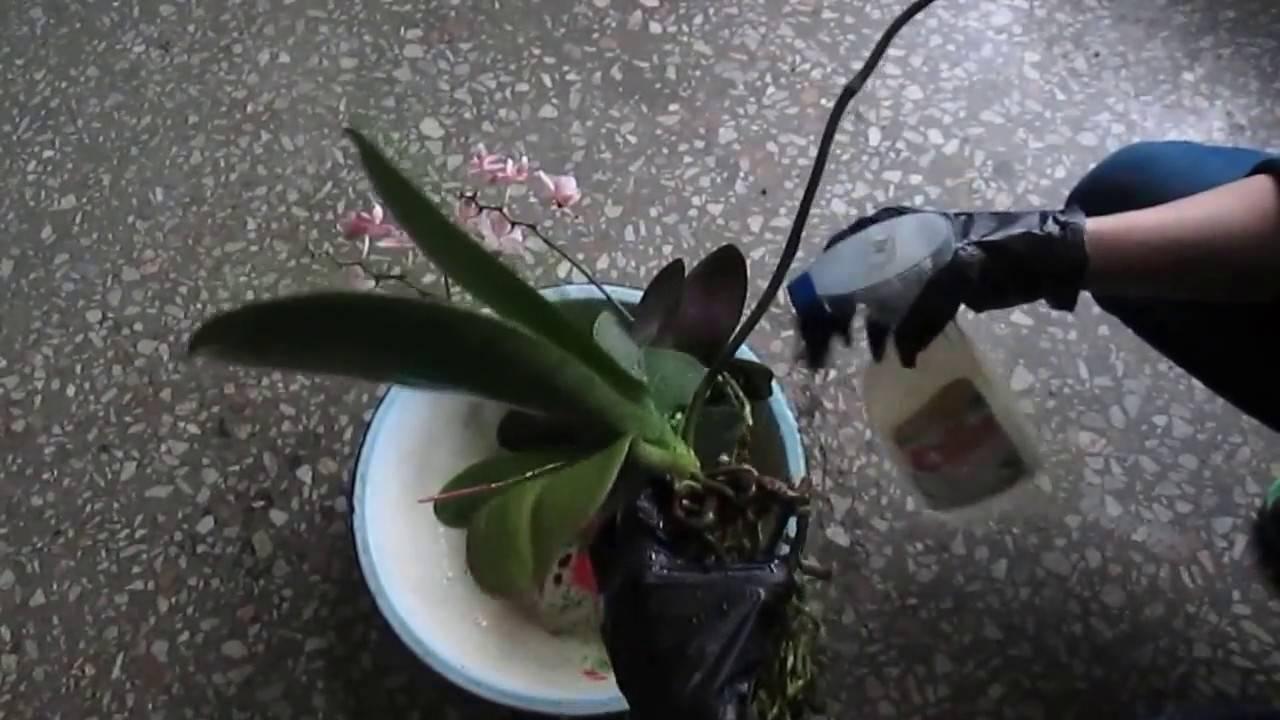 Актара для орхидей: как применять и разводить? инструкция по применению для комнатных растений
