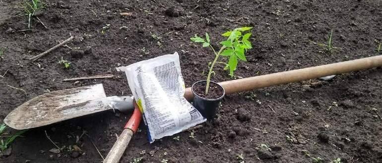 Что положить в лунки при посадке томатов в теплицу