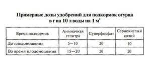 Народные средства для подкормки огурцов: удобрения, рецепты, правила
