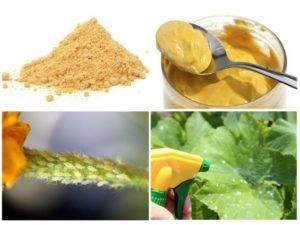 Вредители в огороде: боремся при помощи сухой горчицы
