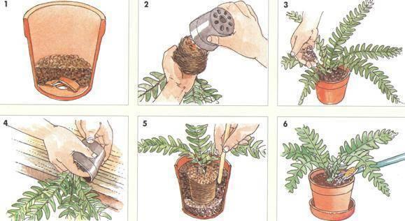Когда пересаживать комнатные растения: основные правила и советы   хочу все знать – полезные и интересные статьи