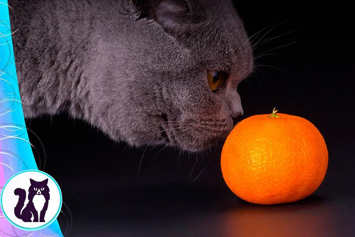 Мыло, эвкалипт, цитрусовые и еще 7 запахов, которые не переносят большинство кошек
