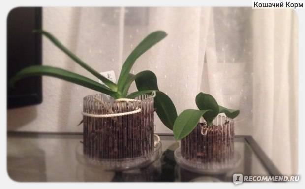 Достойный декор для тропической красоты: как правильно выбрать кашпо для орхидеи?