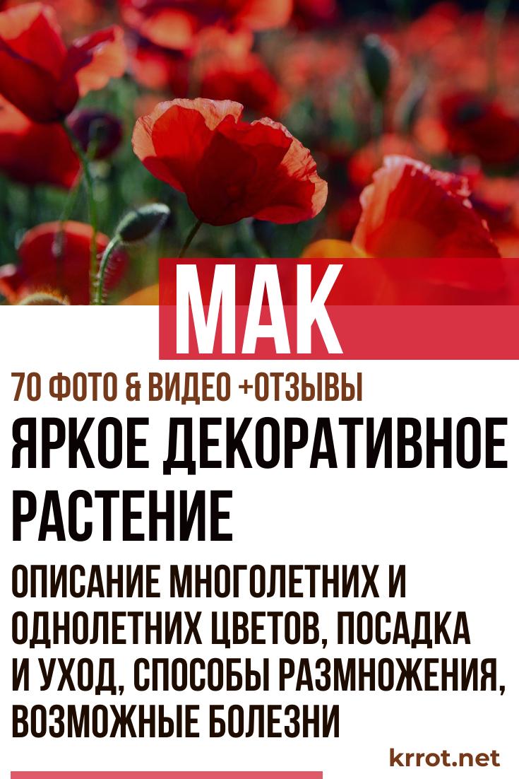 50 фото разных видов и сортов ? цветка «мак», посадка и уход