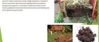 Что такое органические удобрения: характеристики, виды, применение и способы внесения