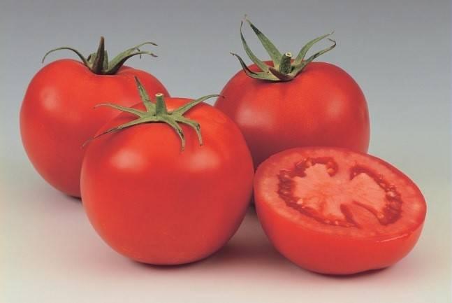 Описание крупноплодного сорта томата маэстро f1, его характеристики