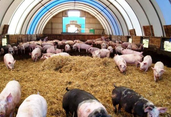 Щелевые полы для свинарников: из чего лучше сделать и как своими руками