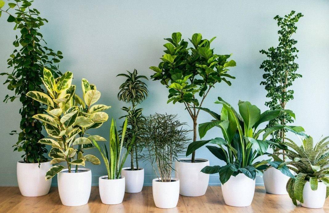 Комнатные растения: фото и названия самых популярных