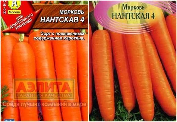 Лучшие сорта моркови. фото с описанием сорта
