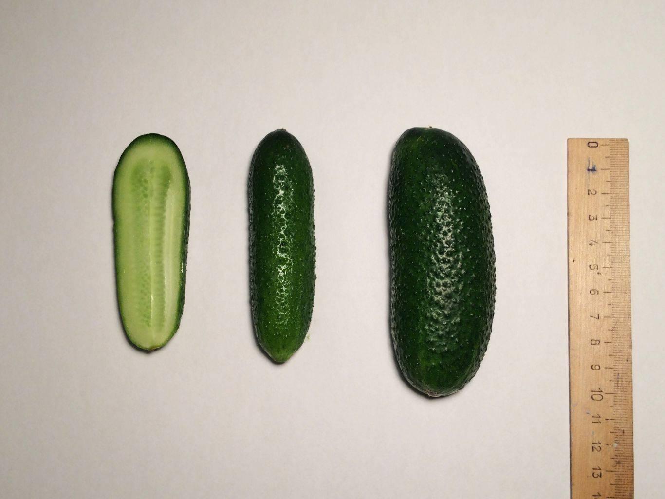 Огурец адам f1: характеристика, достоинства сорта, особенности выращивания, посадка семян на рассаду, уход, отзывы