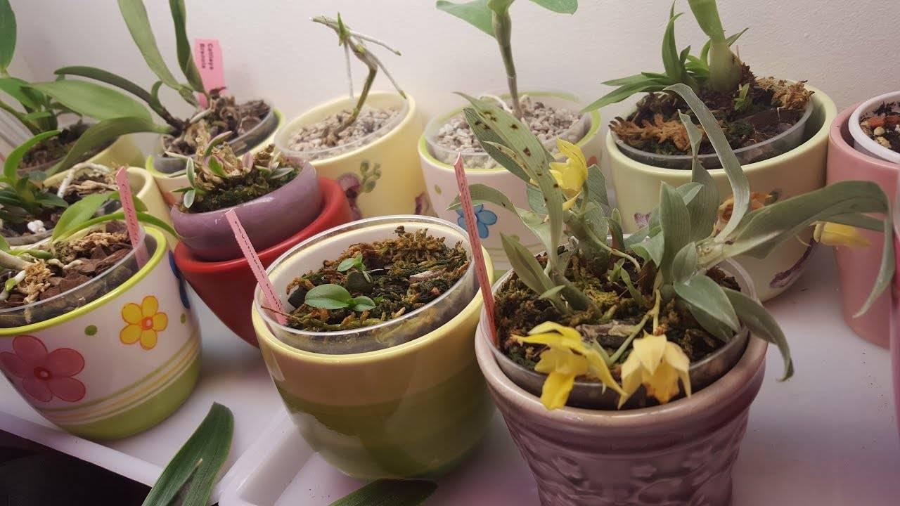 Орхидея ванда: уход в домашних условиях, виды, пересадка