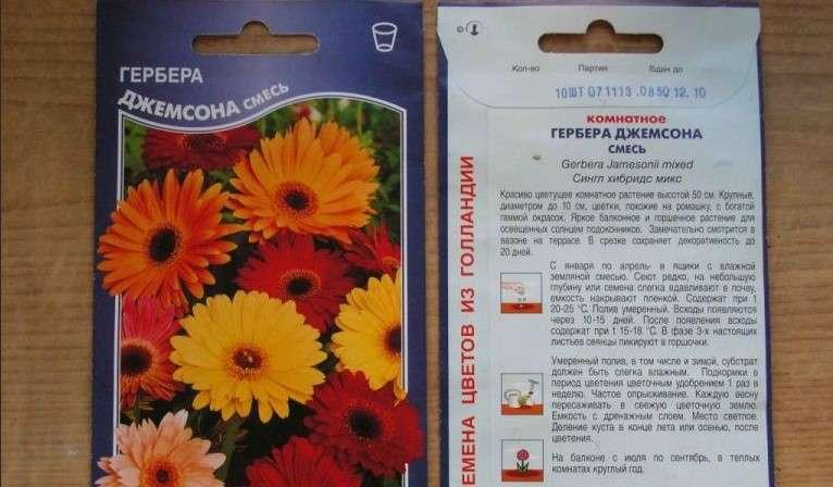 Выращивание герберы из семян в домашних условиях: секреты правильной посадки и ухода