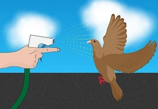 Как избавиться от голубей на балконе: методы борьбы с нашествием