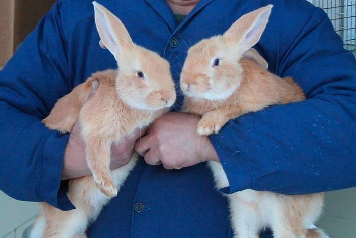 Выращивание кроликов как бизнес — finfex.ru