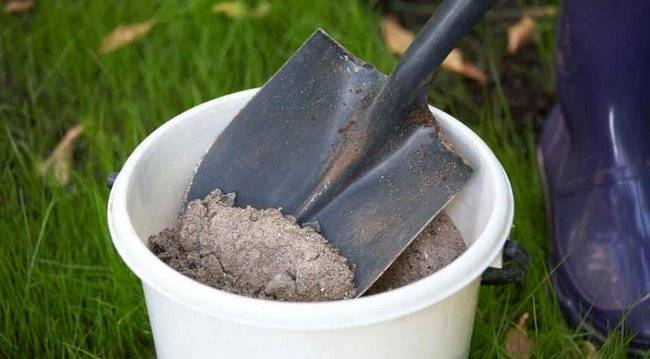 Подкормка смородины весной и осенью: чем подкормить кусты смородины