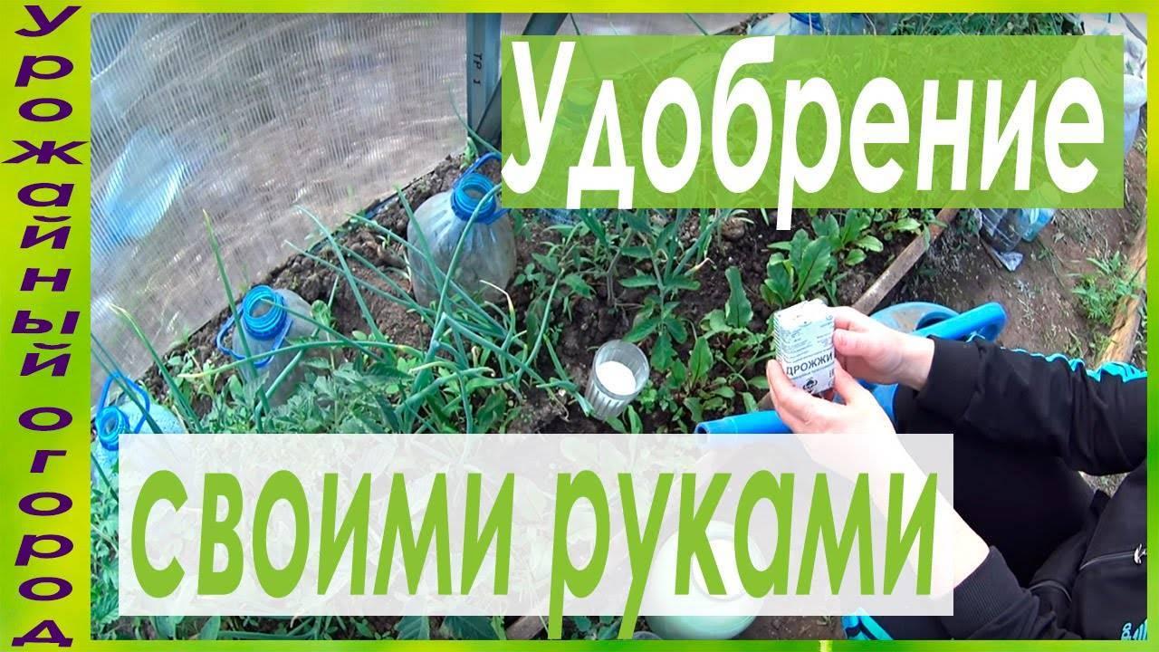 Садовые удобрения для цветов: азотные, калийные, фосфорные, как обеспечить продолжительное и пышное цветение