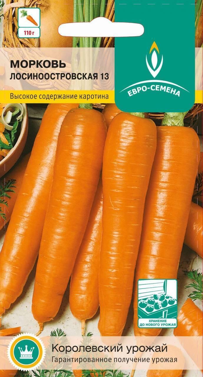 Морковь лосиноостровская 13: характеристика и описание сорта, выращивание