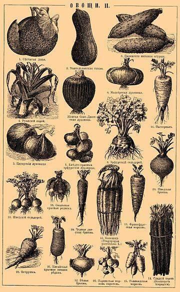 Овощи, повышающие гемоглобин