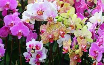 Как правильно нарастить крепкие корни у детки орхидеи