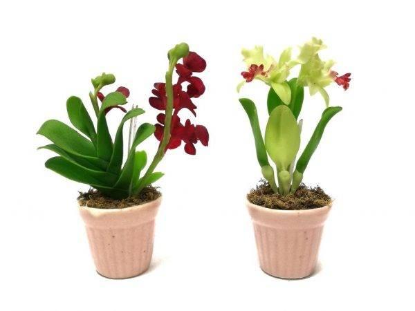 Грунт для орхидей: «цеофлора», «эффект био», «черное золото», «серамис», «велторф», «фаско», kekkila, geolia, и как выбрать, что лучше – готовый или самодельный? русский фермер
