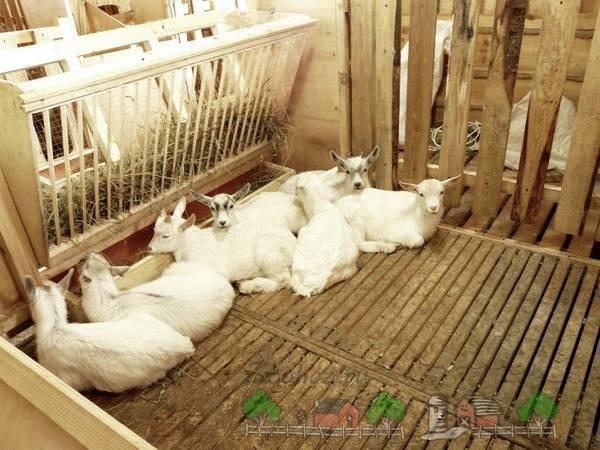 Как построить сарай для коз?