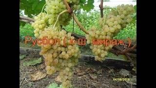 Виноград русбол - описание и особенности ухода, фото и отзывы
