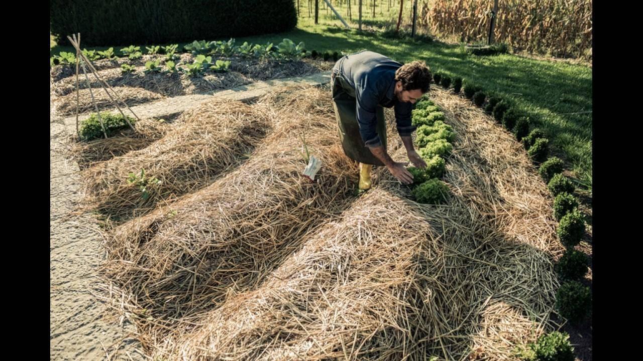 Народные средства от сорняков в огороде