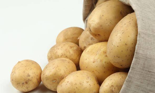 Картофель джелли – описание сорта, фото, отзывы