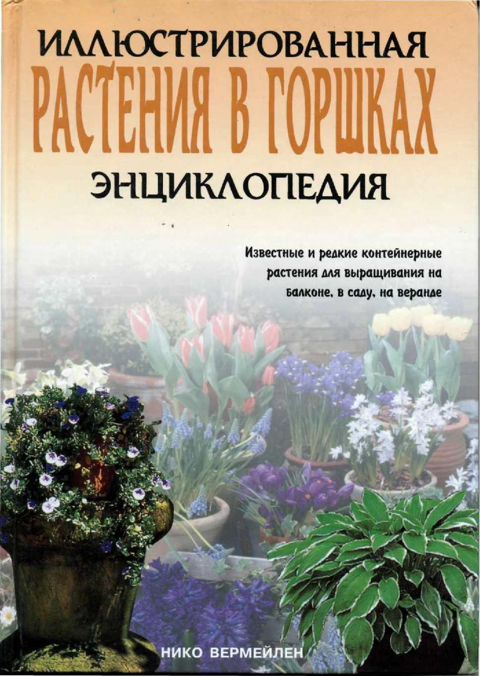 Кроссандра: уход в домашних условиях, выращивание из семян, размножение, пересадка