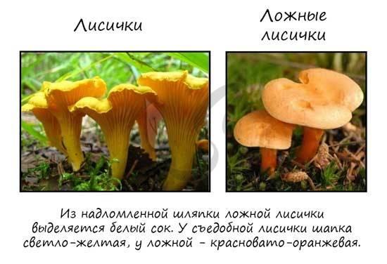 Гриб мицелий — строение, размножения, особенности