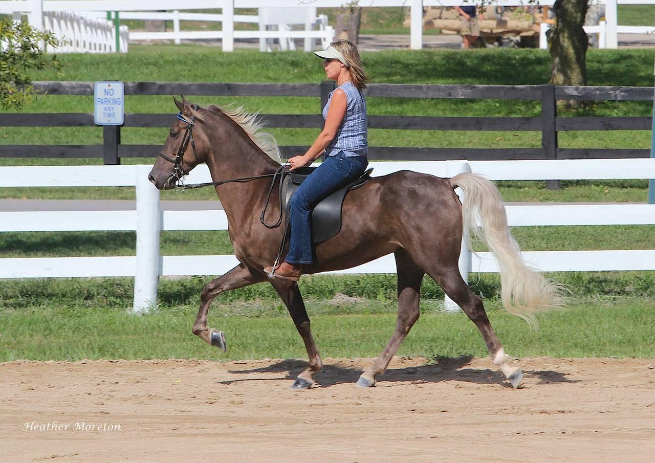 Американские породы лошадей: фото, виды, характеристики, описание и история || американские лошади американская кучерявая лошадь