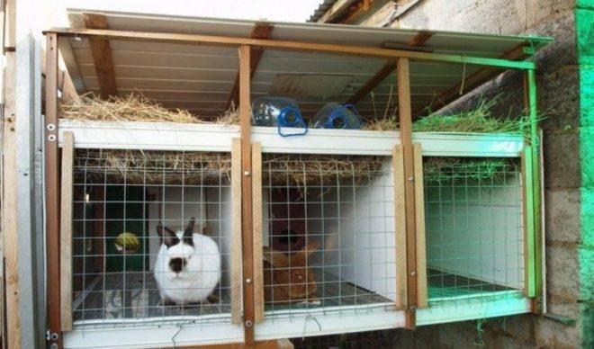 Содержание кроликов: зимой на улице, в вольерах, в сарае, шедах, клетках, правила и условия - гигиена, питание, температура