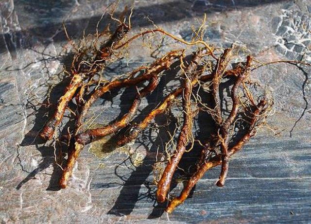 Размножение боярышника черенками осенью - сад и огород