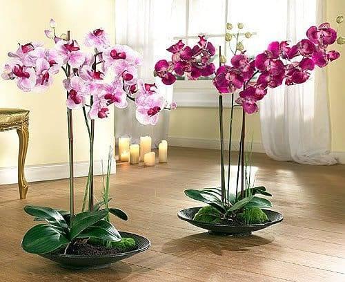 Надо ли обрезать отцветшие цветоносы у орхидеи: как и когда это можно делать