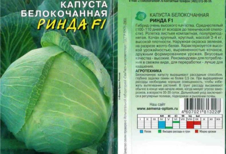 Правила выращивания капусты ринда f1